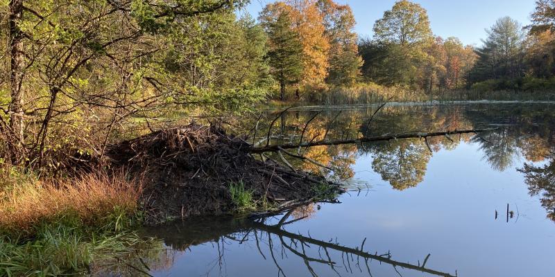 The Mill Brook Preserve by Julie Seyfert Lillis